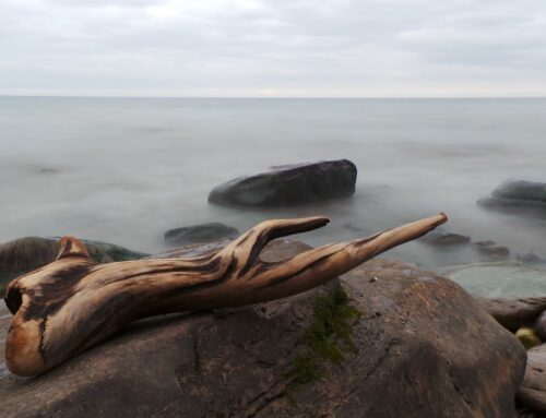 Where to Find Driftwood