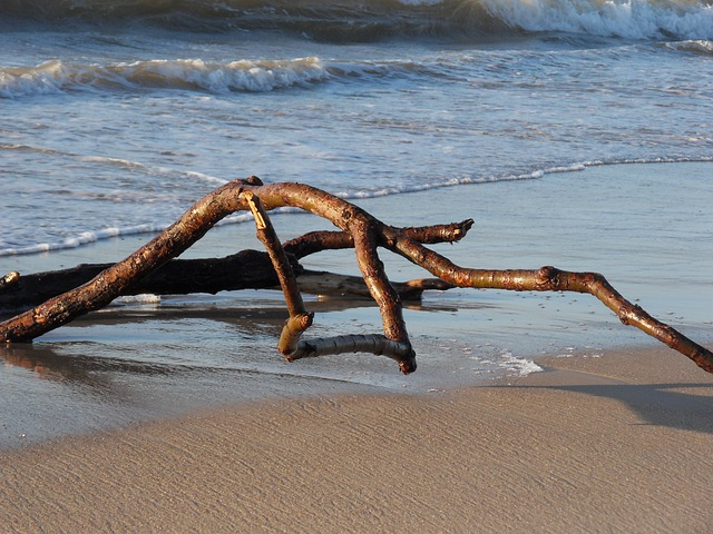 driftwood washed up on beach